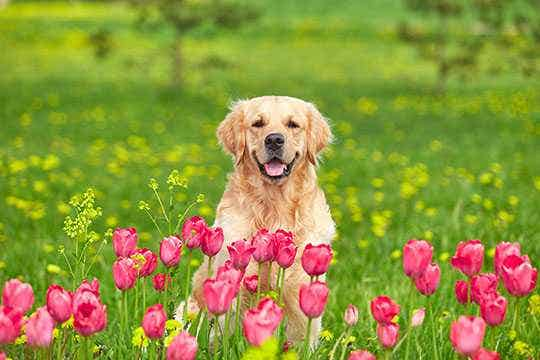 Canine Multi-Vitamin